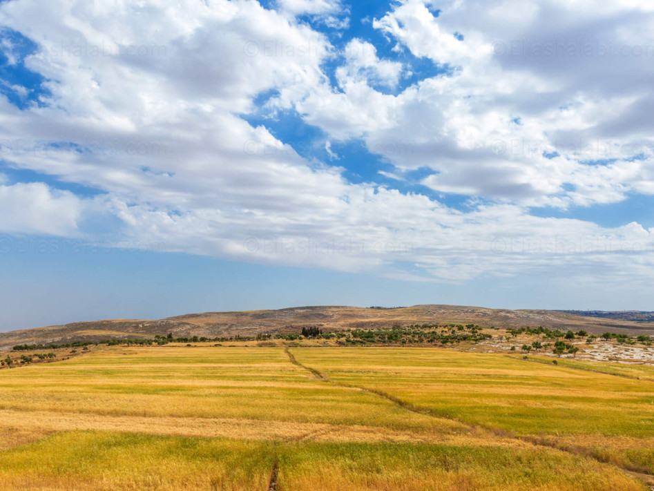 Elias Halabi - Landscape (16).jpg