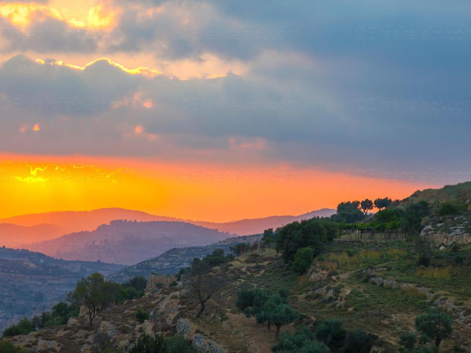 Elias Halabi - Landscape (25).jpg