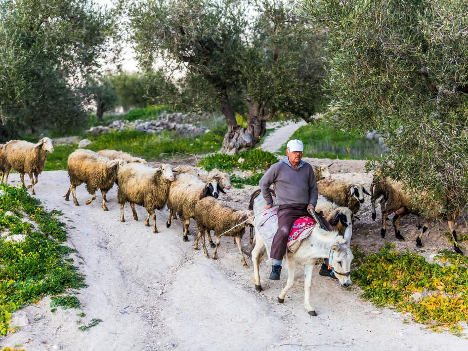 Elias Halabi - Lifestyle (13).jpg