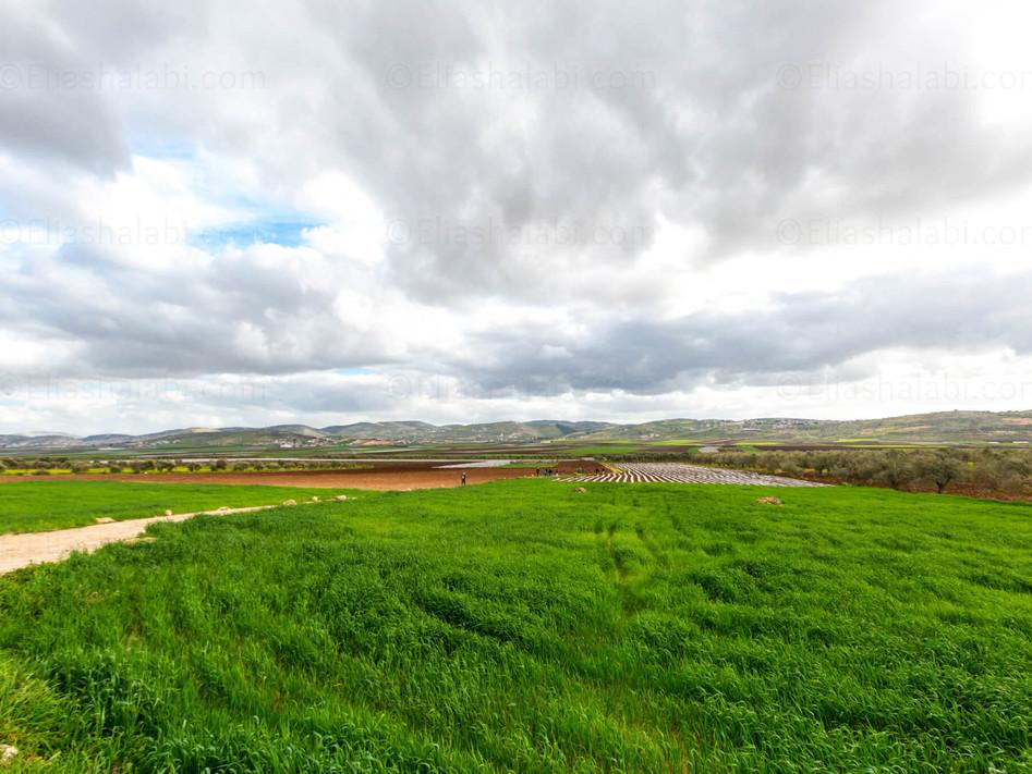 Elias Halabi - Landscape (13).jpg