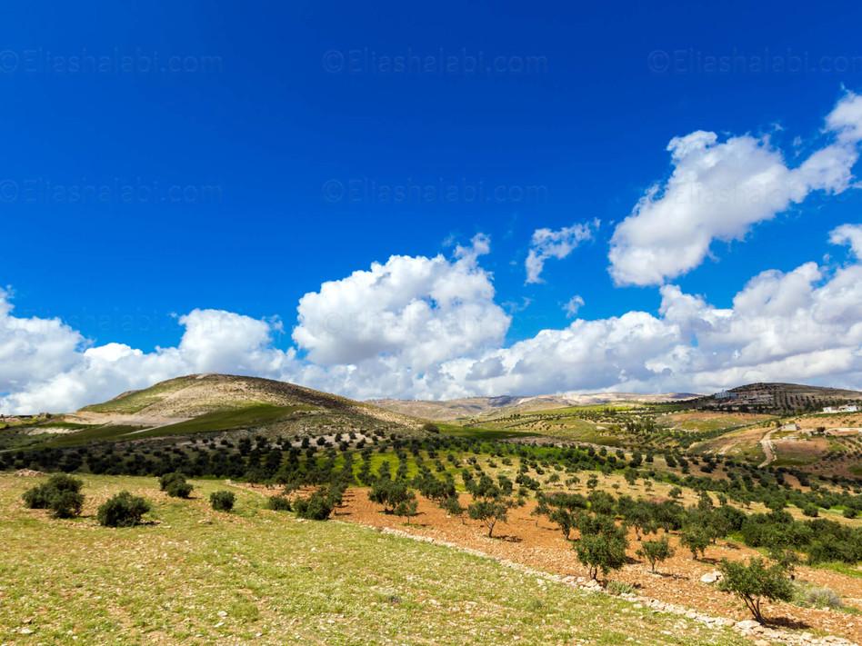 Elias Halabi - Landscape (15).jpg