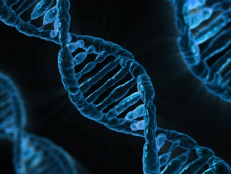 DNA: THE STORE-HOUSE OF OUR INFORMATION