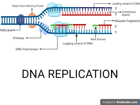 DNA REPLICATION: ALL THAT YOU NEED TO KNOW