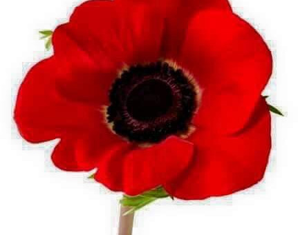 Please keep the Poppy going for Veterans - Lest We Forget 🌺.