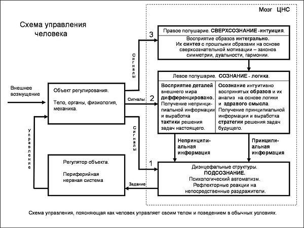Схема модели управления человека