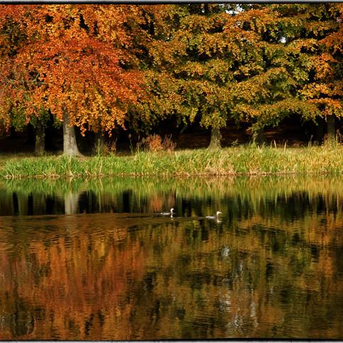 Autumn in Blenheim Park