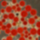 Aplanospore  1_hf.jpg