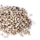 Canapa seeds_edited.jpg