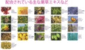 plants-01-min.jpg