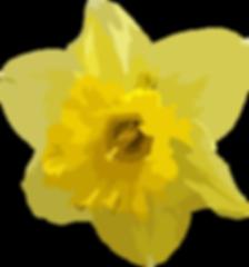 daffodil2-01_65.png