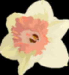daffodil2-03_65.png