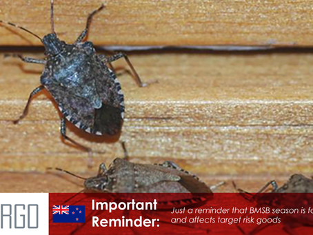 Brown marmorated stink bug: requirements for importers to New Zealand Season 2021-22