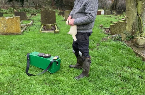 Ferrets working grave site