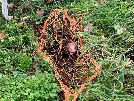 Ferret working burrow