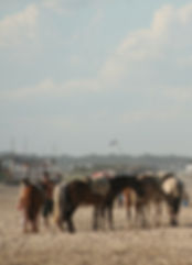 Horstracking beach Valizas Uruguay