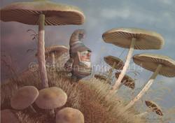 Gnome Mushrooms Nathan Smith