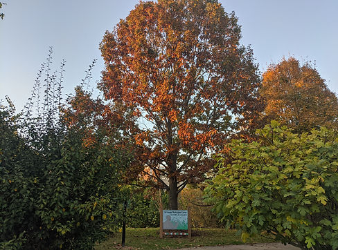Edible Park (2).jpg