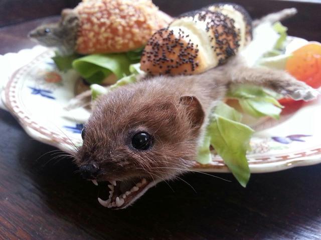 weasel+roll
