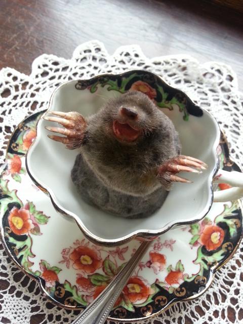 Mole+Tea