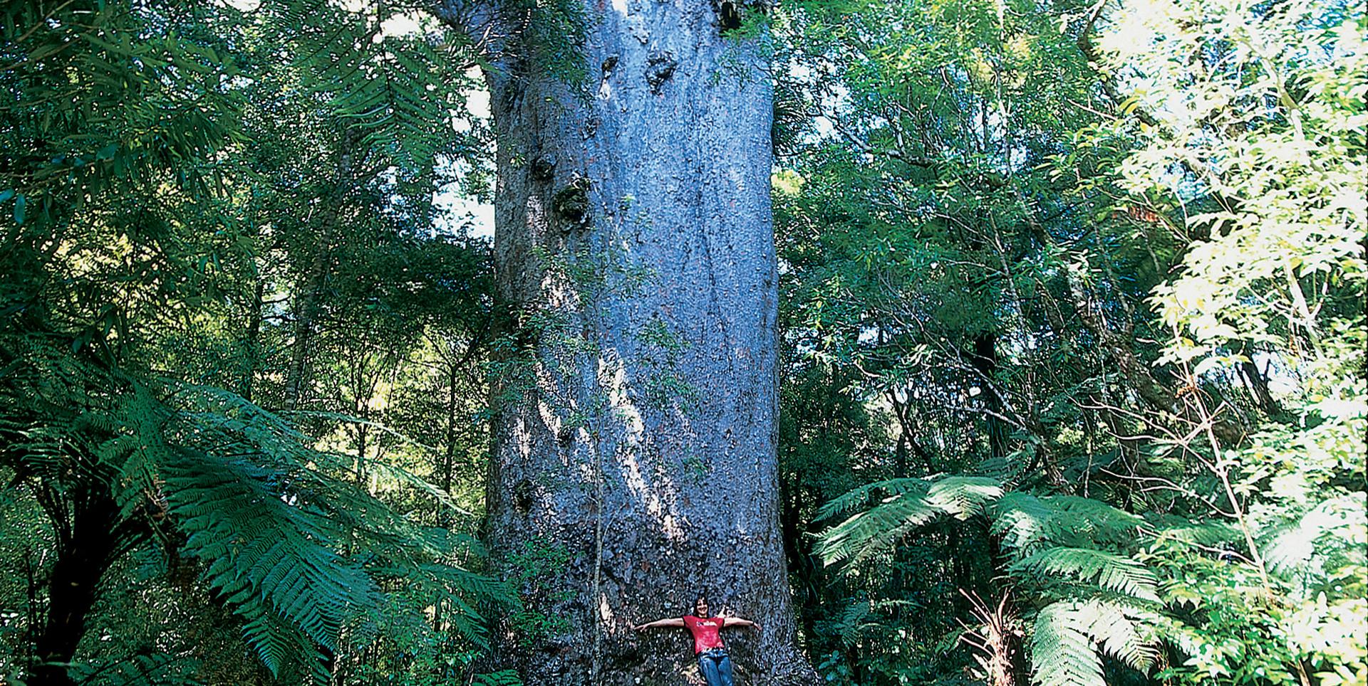 Waipoua-Forest.jpg