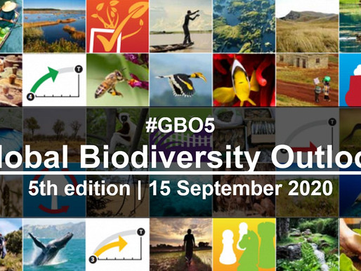 The Global Biodiversity Outlook 'final report card' - 'transformative changes are required'