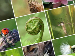 Announcing NCI's new platform to help businesses take action for biodiversity