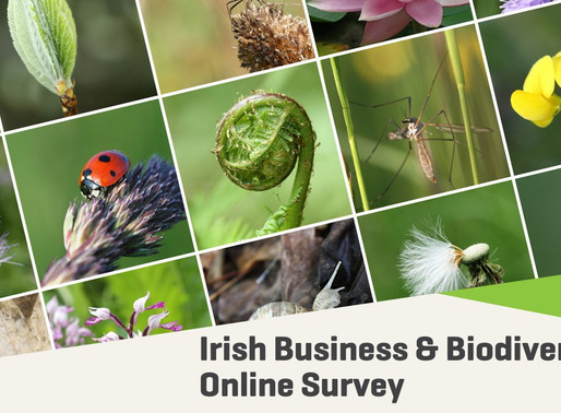 IFNC to co-host webinar on Business & Biodiversity on October 6th, 2020, alongside BITC
