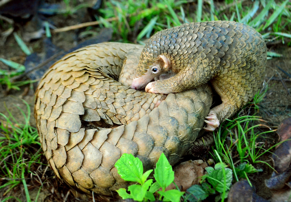 A brown scaly creature with small features and a long tail curled up in some green grass