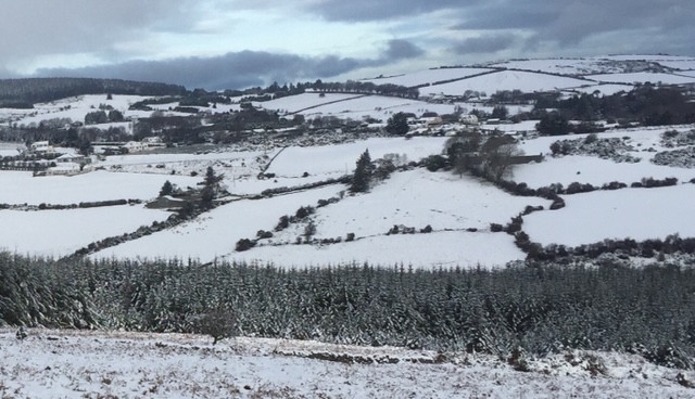 Snow-covered fields dotted by dark green trees and hedges