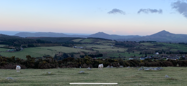 A few sheep in a green field landscape, hills, beyond and a soft pastel sky
