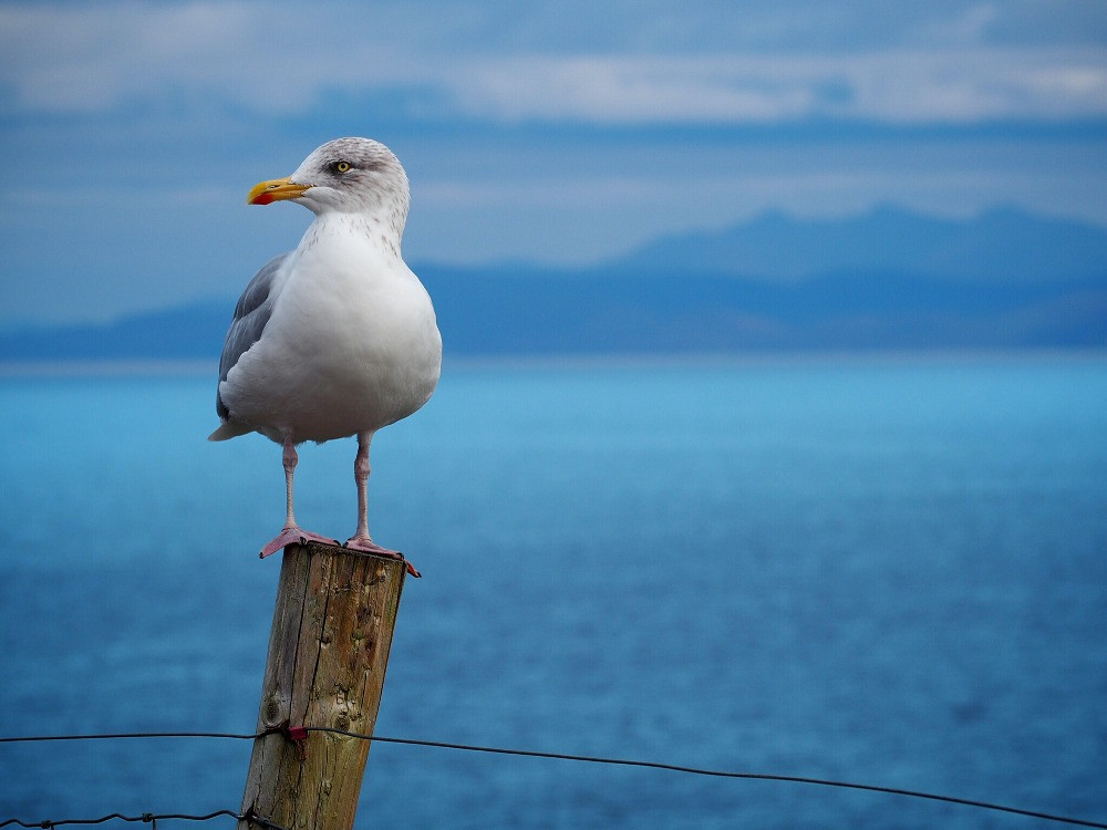 A white/grey gull with orange beak and legs stands on a wooden fencepost in front of a light blue ocean and sky