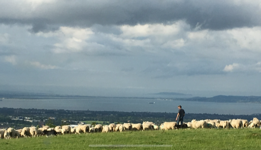 Changes and challenges in land use within our Dargle catchment - a farmer's view
