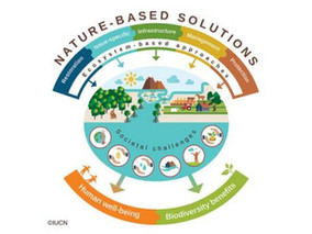 Embracing Nature-based Solutions for Climate Adaptation