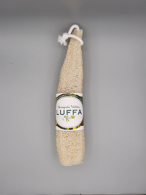Luffa - Medium
