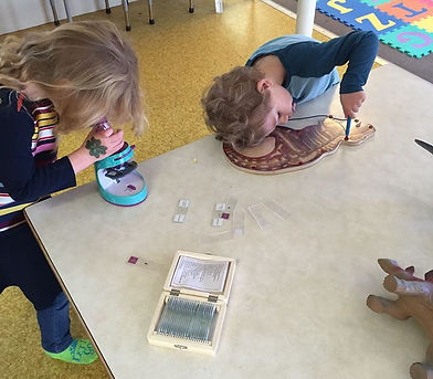 Science Magnetic Learning