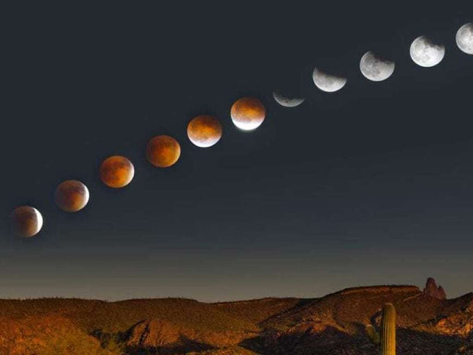 eclipse lunar cactus.jpg