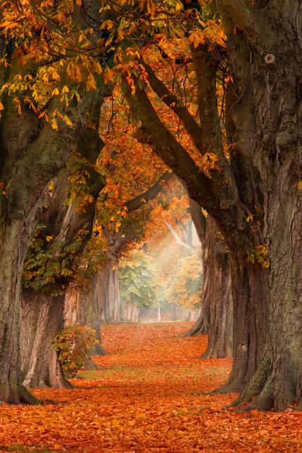 Autumn Woods - Cardiff