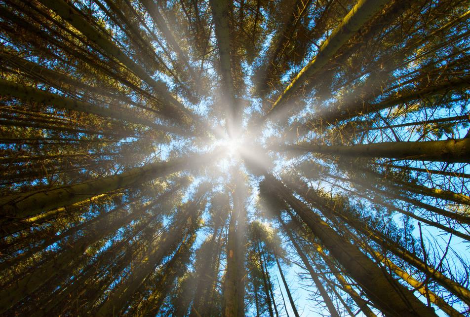 Tree View - Brecon Beacons