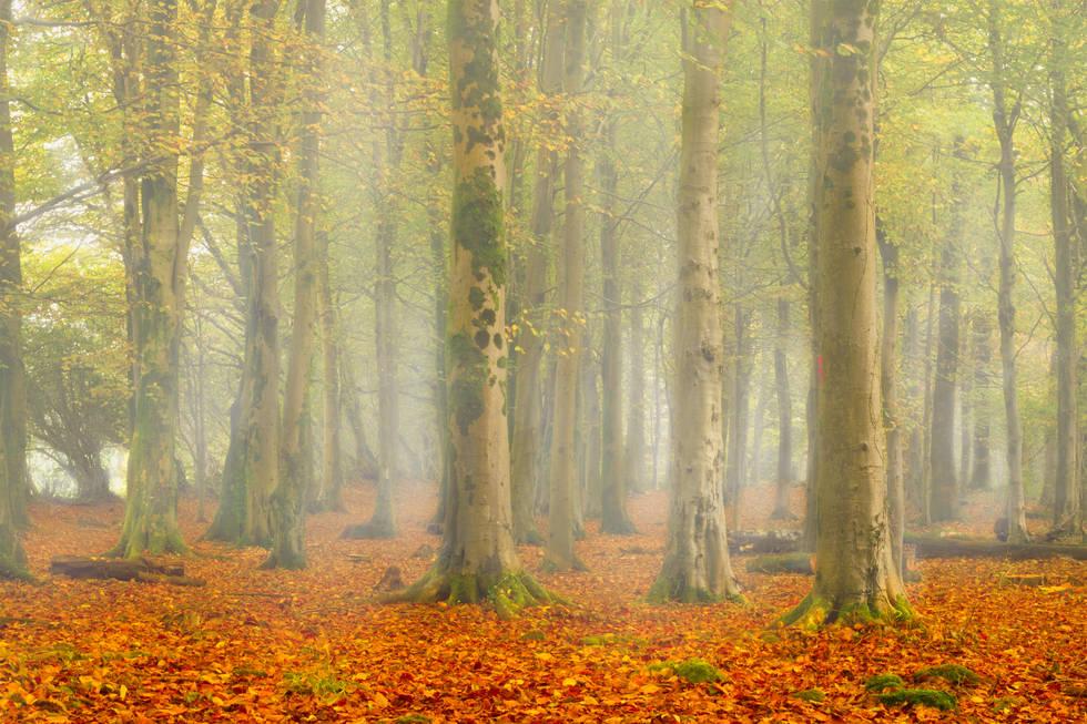 Autumn Fog - Castell Coch