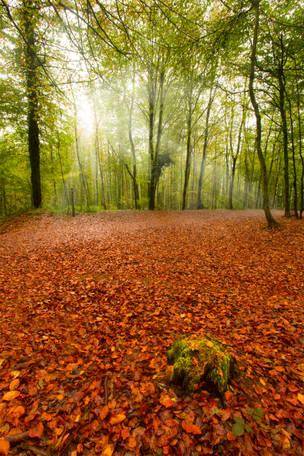 Autumn Colours - Castell Coch