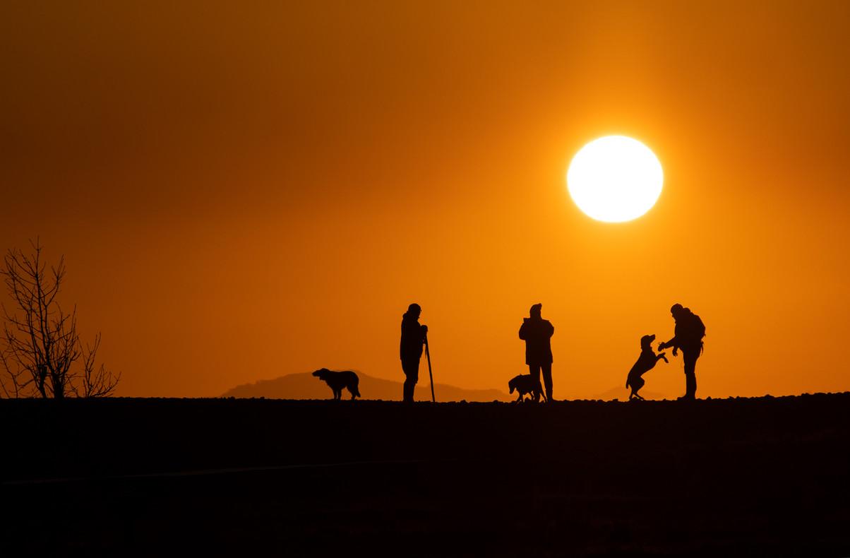 Dog-Walkers-NO-WM.jpg
