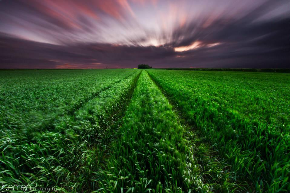 Farm Field - Rhoose