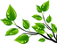 90-904676_hoja-verde-clip-art-desenho-de