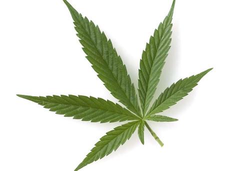 La marihuana es la droga de mayor consumo en Reino Unido