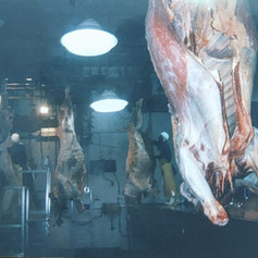 Observing the gutting of beef carcasses, Lee Meats, 1999