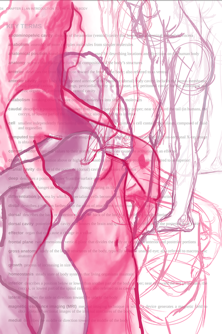 Studying the Figure