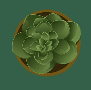Green Succulent Top View