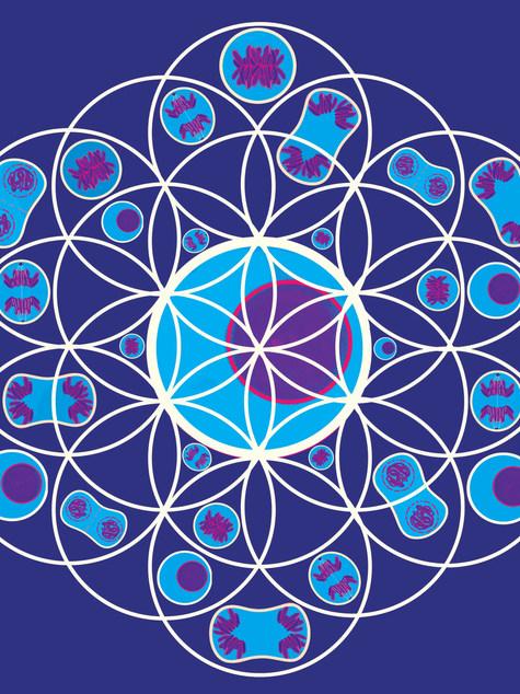 The Sacred Geometry of Life