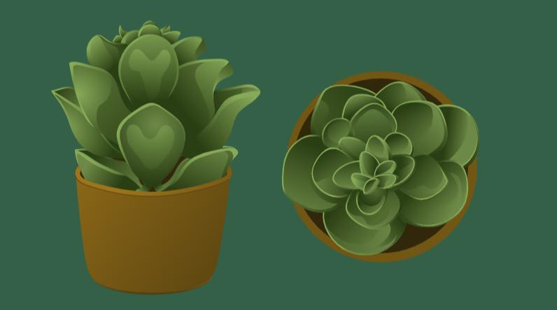 both succulents_edited.jpg