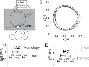 Flexible Assimilation of Human's Target for Versatile Human-Robot Physical Interaction